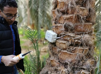 Why IoT is the answer for Palm trees Infection Control?